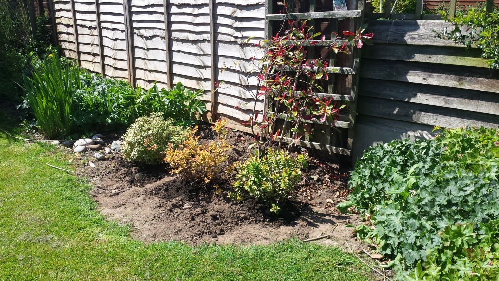 Garden bed with three shrubs and a photinia pink marble behind against a trellis