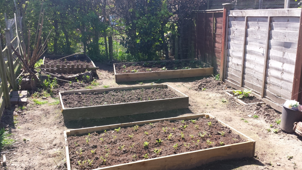 Veg patch with wooden raised beds