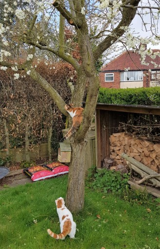 Tortoiseshell cat up a tree and a white and ginger cat at the bottom