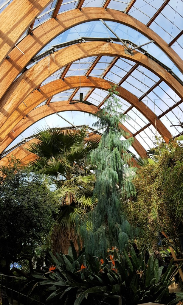Large green tropical plants underneath a curved glass roof with shaped wooden beams