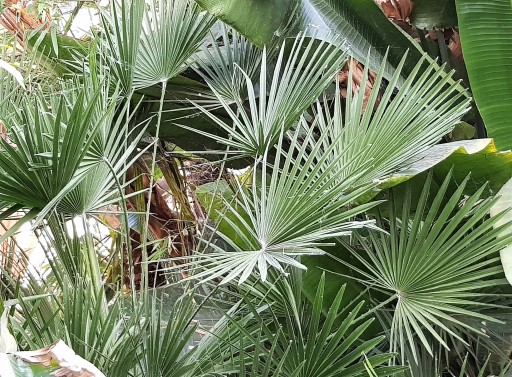 Circular leaves made up of grass-like sharp lengths