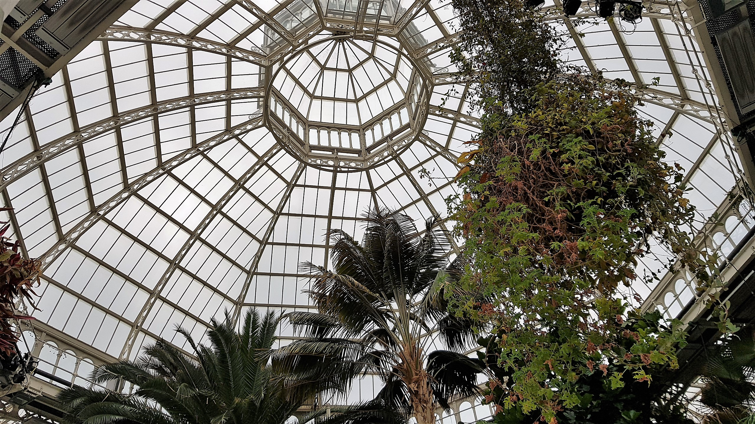Circular glass roof with plants hanging from it