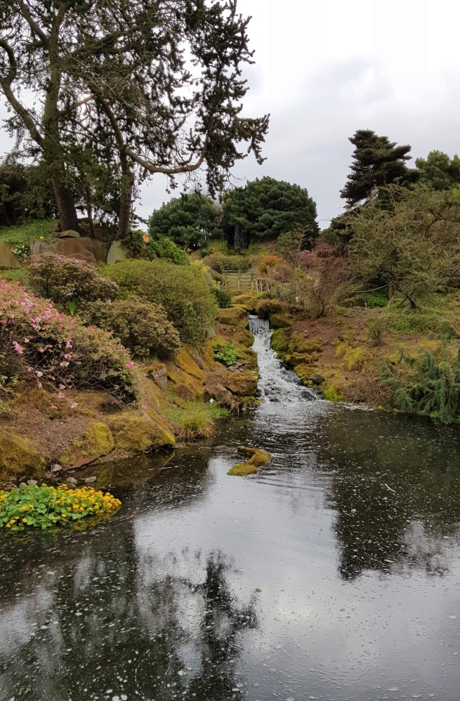 A small waterfall into a pond and surrounded by rockery style planting