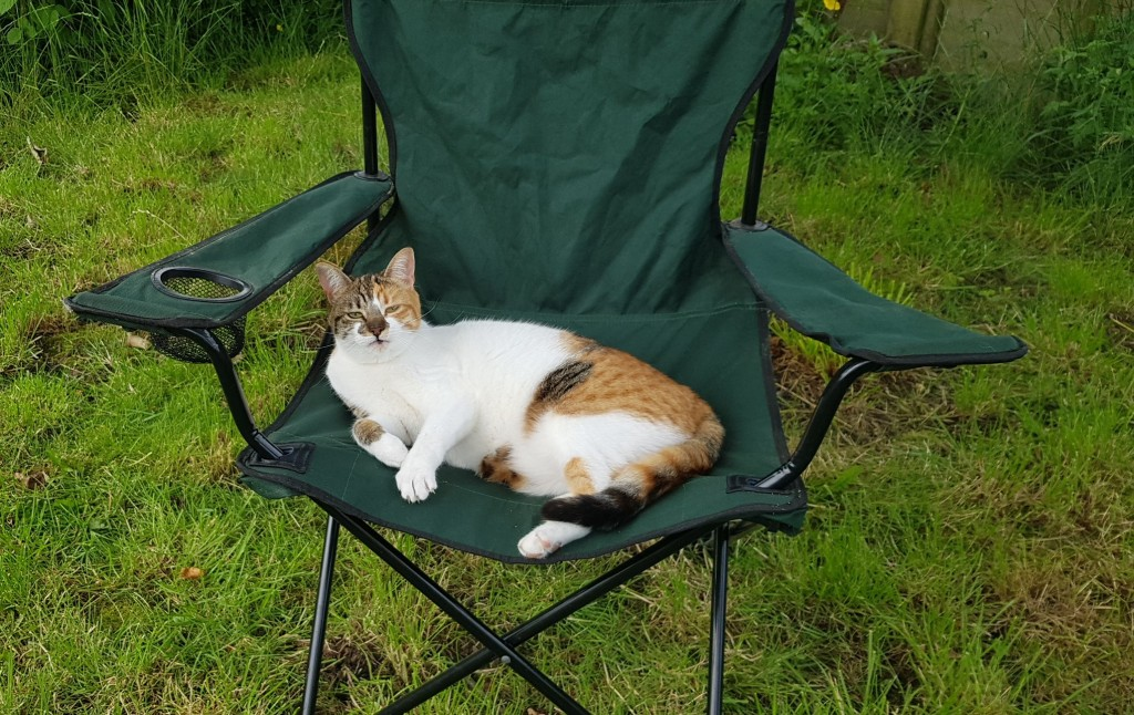 Tortoishell and white cat sitting on a green canvas outdoor chair