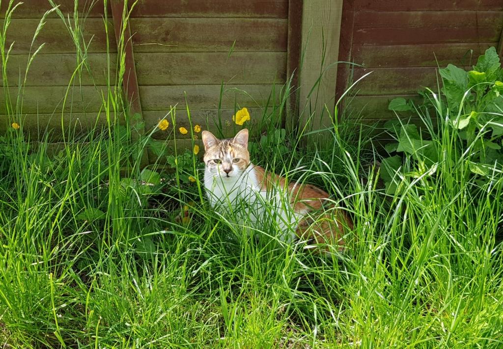 Tortoiseshell and white cat hiding in long grass