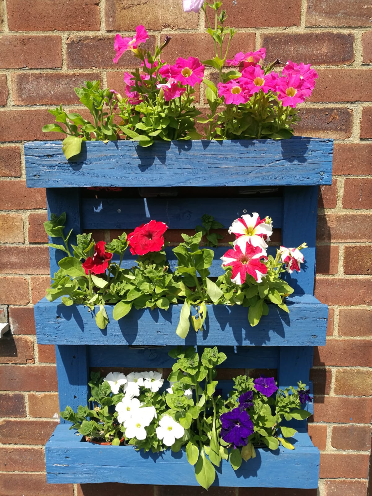 Bright blue planter made from a pallet, mounted on a wall and filled with petunias