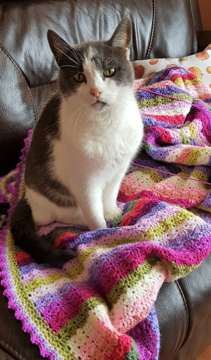Grey and white cat sitting on a multicoloured stripy crocheted blanket